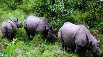 wild life safari tour in Nepal