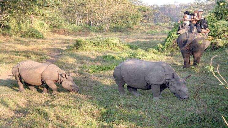 Wildlife tours Nepal