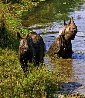 Chitwan wild life safari tour package