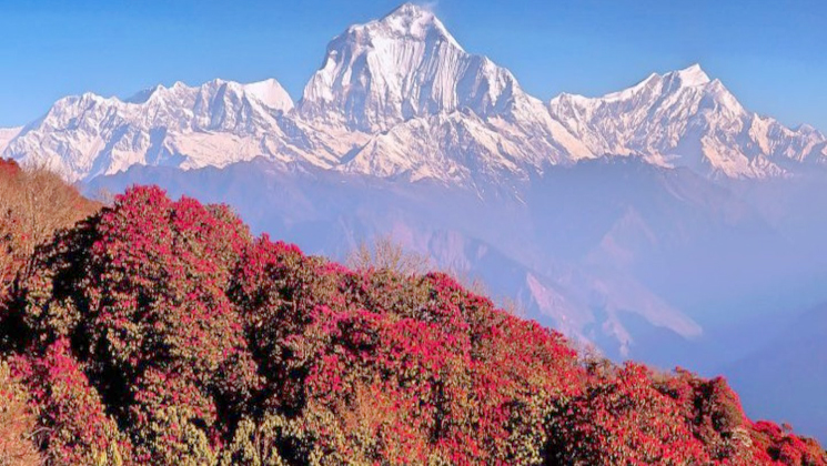 poon hill trekking best beginner treks in Nepal
