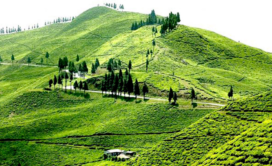 ilam tea garden