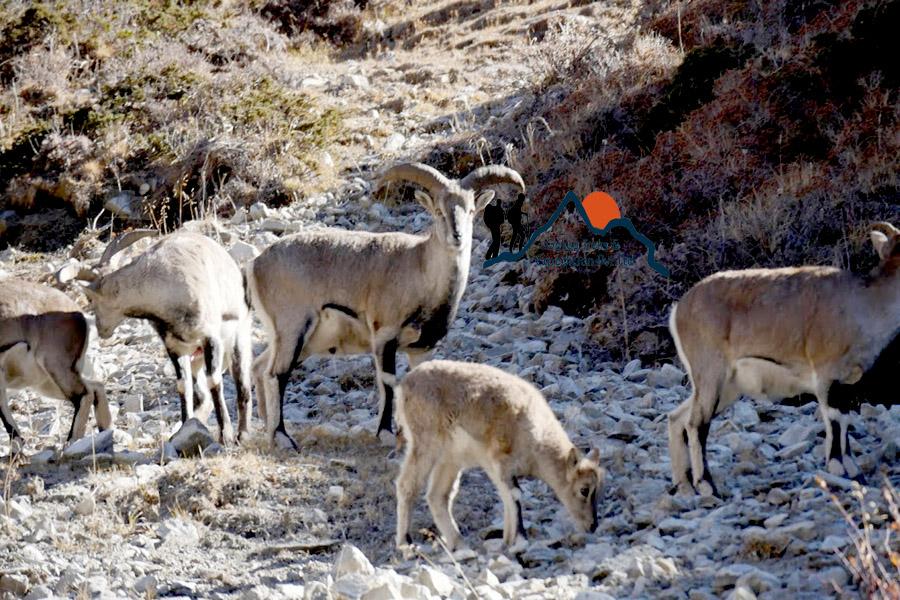 fauna in Nepal